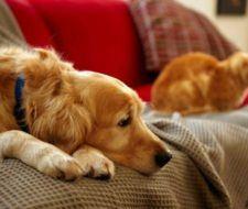 Tener un animal de compañía, mejora la salud. (III)