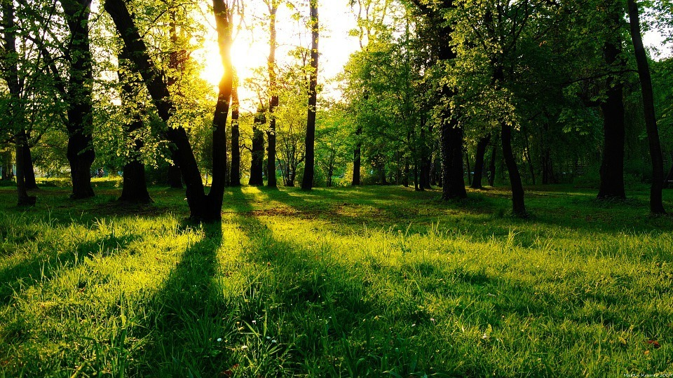 consejos-para-vivir-sano-naturaleza
