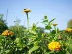Remedios para la alergia de primavera