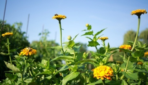 remedios-para-la-alergia-de-primavera-polen