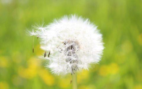 tratamiento-para-la-alergia-del-polen