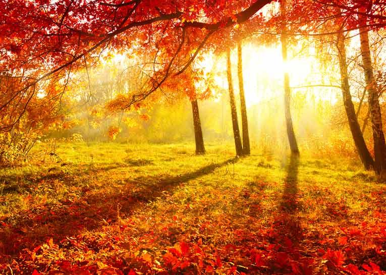 10-consejos-para-cuidar-la-salud-en-otono-paisaje-otonal