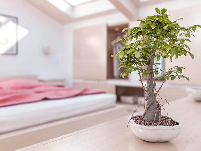 diez-principios-del-feng-shui-para-la-salud-bonsai