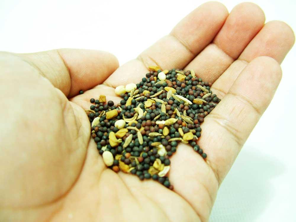 cuales-son-las-semillas-mas-saludables-puñado