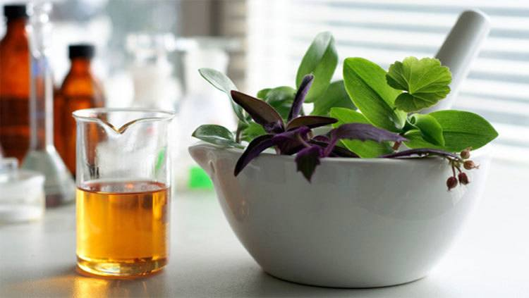 borraja-propiedades-beneficios-y-como-tomarla-flores