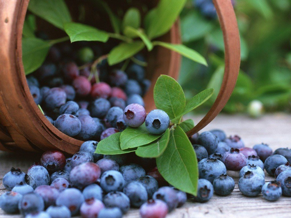 el-arandano-azul-y-sus-propiedades-antioxidantes-pequeñas-bayas