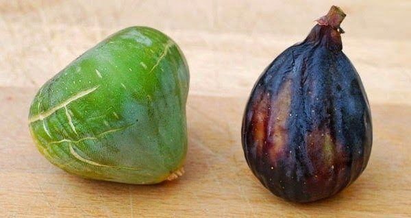 La breva (derecha) es el fruto de la primera de las dos cosechas (junio a julio) que produce la higuera. Resulta muy apreciada al ser de mayor tamaño que el higo (izquierda)