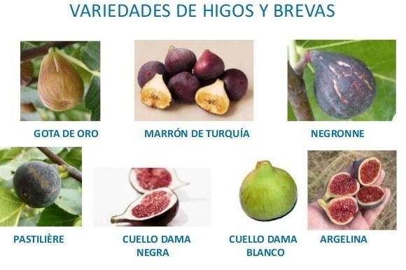 Variedades de Higos