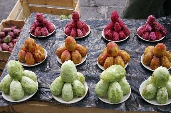 el-opuntia-coadyuvante-en-dietas-de-control-de-peso-frutos