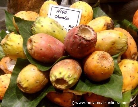Frutos de Opuntia ficus-indica (llamados también como opuntia indio higo, nopal, tuna)