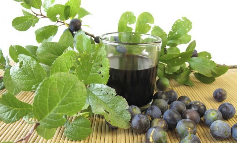 los-10-licores-medicinales-mas-utilizados-plantas
