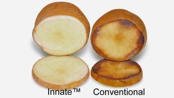 los-alimentos-transgenicos-cules-son-patata