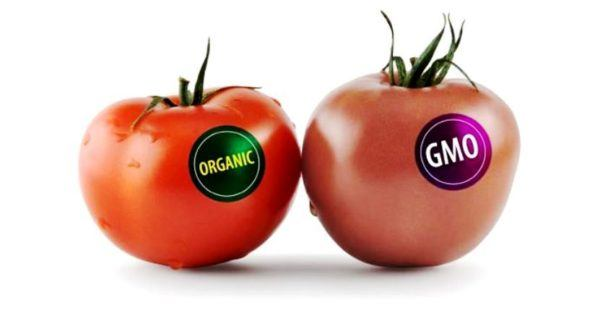 los-alimentos-transgenicos-cules-son-tomates