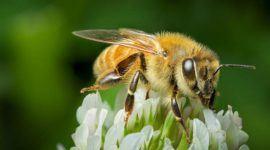 Miel de Manuka: Beneficios, propiedades y contraindicaciones