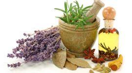 Las 10 plantas medicinales más utilizadas