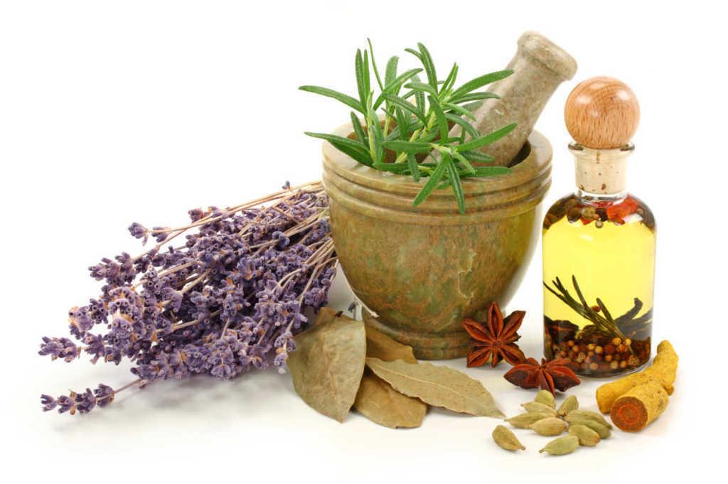 las-10-plantas-medicinales-mas-utilizadas-infusiones