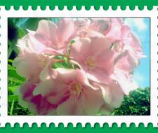 Plantas con flores aceleran la recuperación después de una cirugía