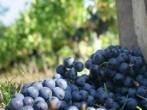 Propiedades del vino para la salud