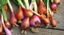 Las 15 verduras de invierno para cuidar nuestra salud