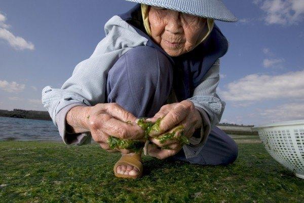 dieta-okinawa-para-vivir-mas-de-100-anos