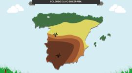 Consejos ante la alergia al polen del olivo