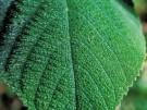 El roce de esta planta produce tanto dolor que es capaz de llevarte al suicidio ¿Sabes cuál es?