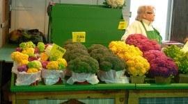 La ciencia muestra como las hortalizas luchan contra el cáncer