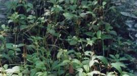 Suplementos para aumentar las defensas orgánicas