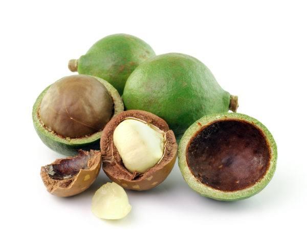 propiedades-macadamia-