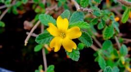 Damiana: Todos los beneficios y propiedades de esta planta