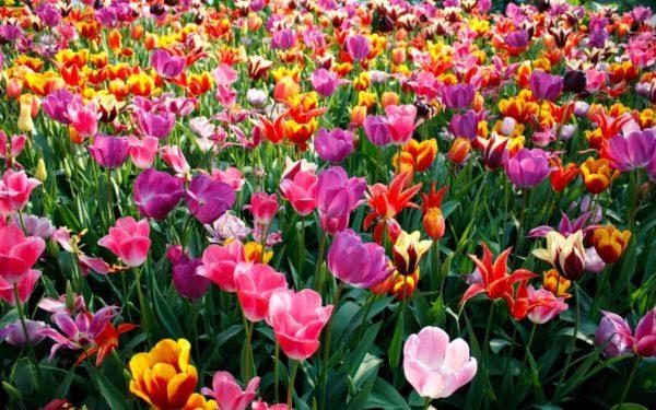 cuales-son-las-flores-de-la-primavera-campo
