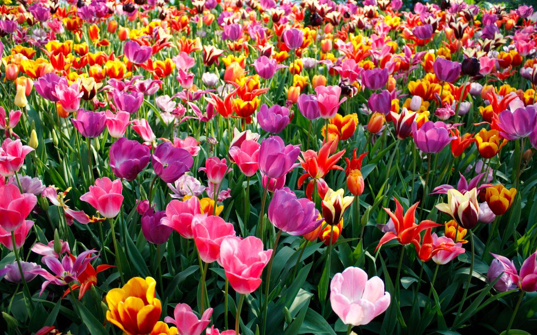 Resultado de imagen de foto flores de primavera