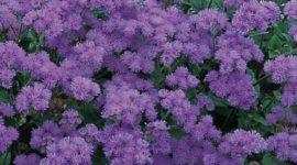 ¿Cuáles son las flores de la Primavera?