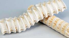 Cartílago de tiburón: Propiedades y beneficios para nuestros huesos y articulaciones
