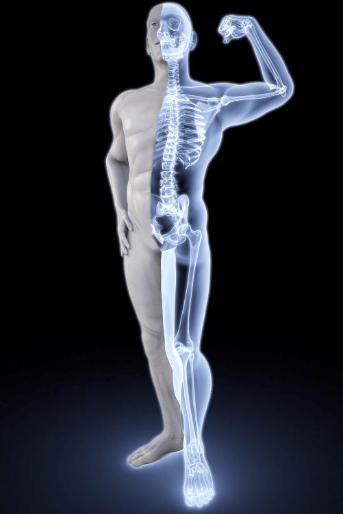 ciruelas-propiedades-y-beneficios-huesos