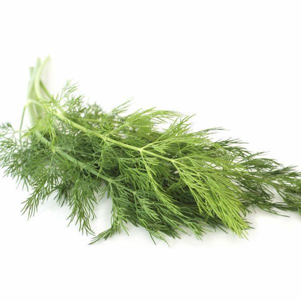 eneldo-propiedades-y-beneficios-planta-aromatica