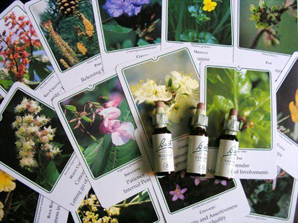 flores-de-bach-cuales-son