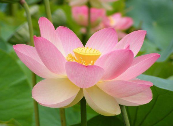 flores-de bach-para-adelgazar-terapia