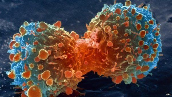 propiedades-y-beneficios-del-cardo-mariano-cancer