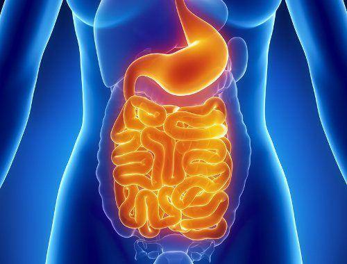 propiedades-y-beneficios-del-cardo-mariano-flora-intestinal