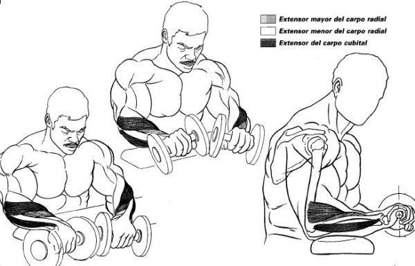 ejercicios-para-brazos-antebrazos-elevaciones