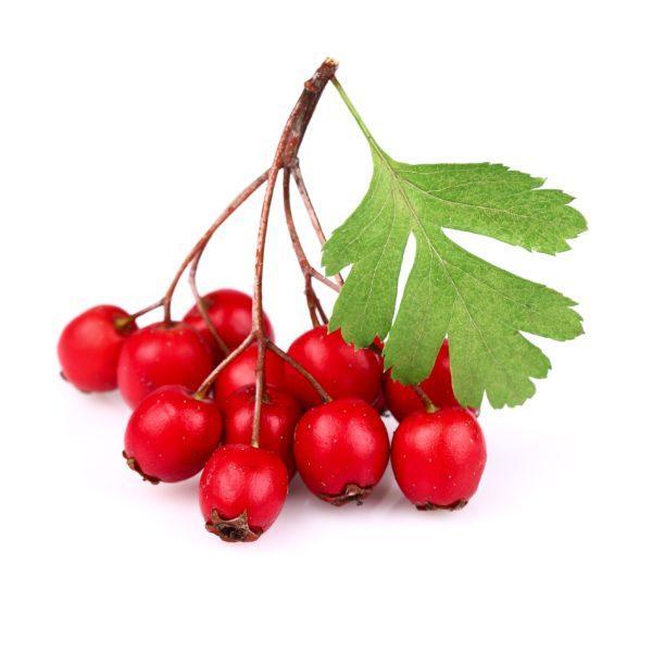 el-aceite-de-rosa-mosqueta- hacer-casero-frutos