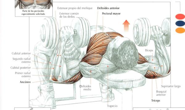 mejores-ejercicios-pectorales-floor-press-con-mancuernas