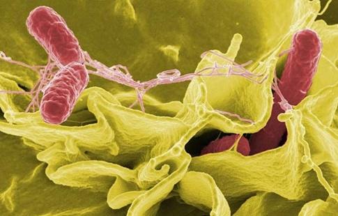 para-que-sirve-el-ajenjo-bactericida