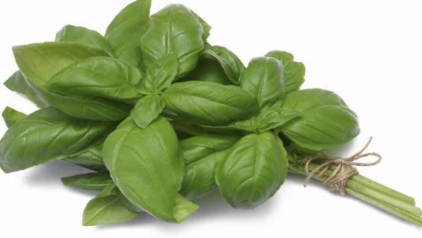 albahaca-propiedades-y-beneficios-dieta