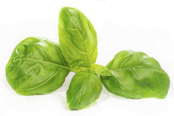 albahaca-propiedades-y-beneficios-hojas
