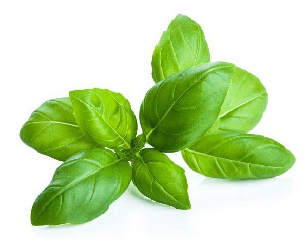 albahaca-propiedades-y-beneficios-planta