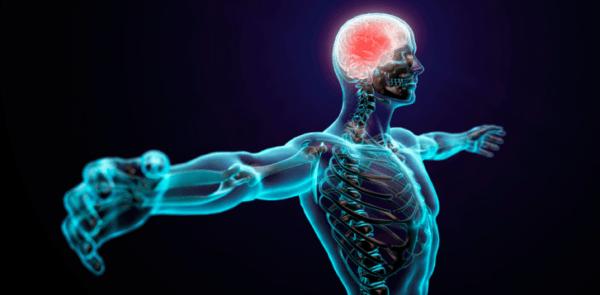 albahaca-propiedades-y-beneficios-sistema-nervioso