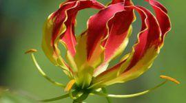 ¿Cuáles son las flores del Verano?