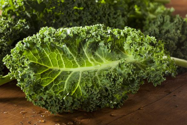 col-kale-super-alimento-superfood